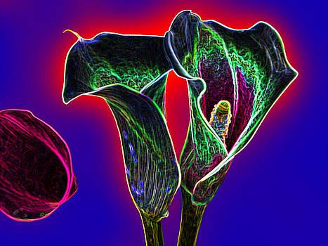 Calla lilies by Jesus Nicolas Castanon