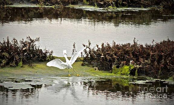 Gwyn Newcombe - Calling All Egrets