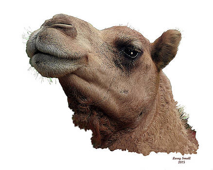Camel by Larry Small