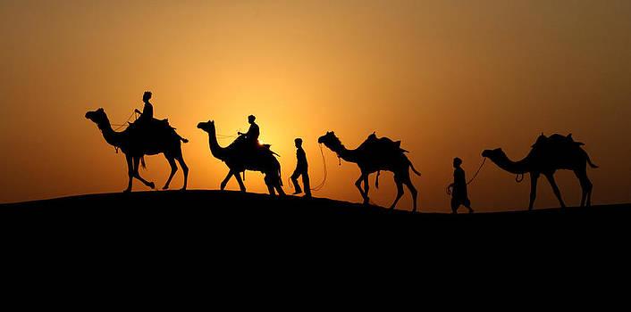 Camel Men by Dawn Nicoli