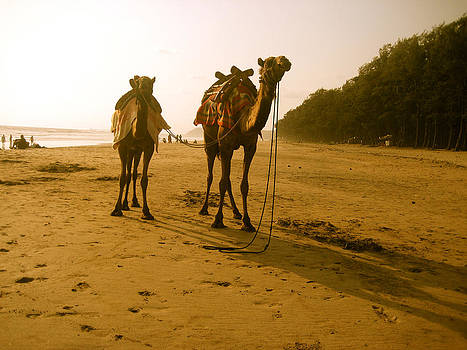 Camel on the sandy shore by Ravindra Kajari
