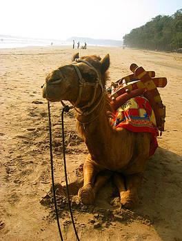 Camel on the shore by Ravindra Kajari