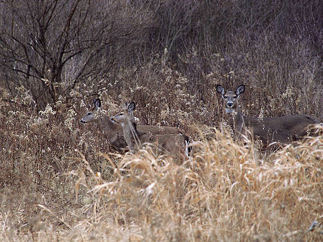 Camouflaged Deer by Christy Woods