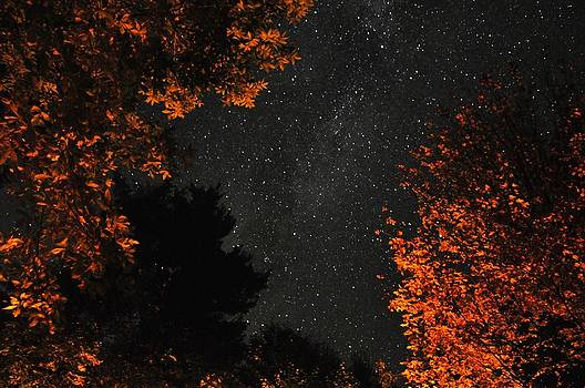 Campfire Glow by Jeff Moose