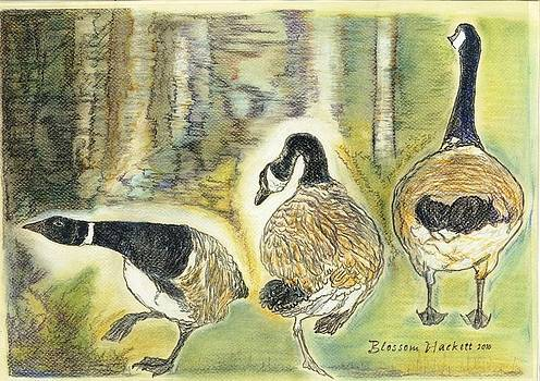 Canada Geese by Blossom Hackett