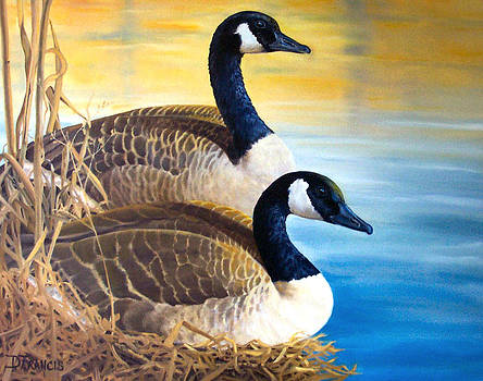 Canada Geese by Donna Francis