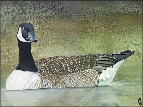 Canada Goose by Marsha Friedman