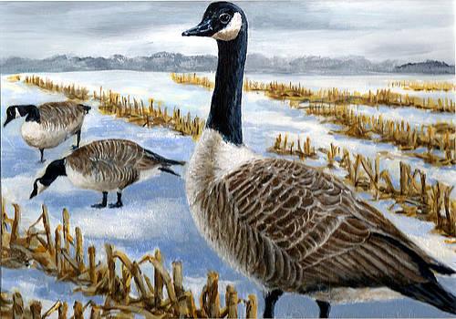 Canada Goose by Paul Gardner