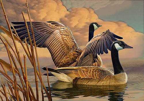 Canadian Geese by Valer Ian