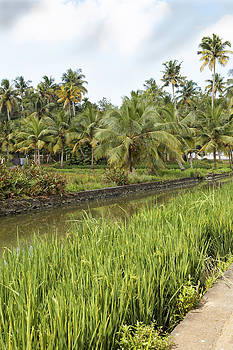 Kantilal Patel - Canal Paddys Palms
