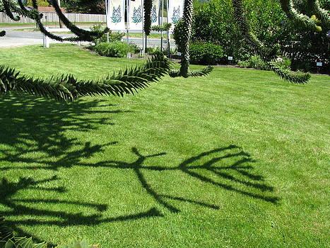 Candelabra Shadows by Monica Cranswick