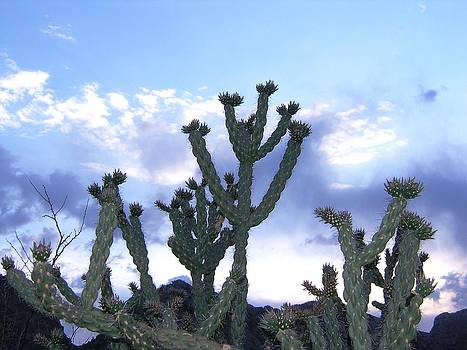 Cane Cholla Cactus at Big Bend National Park by Kenneth Lim