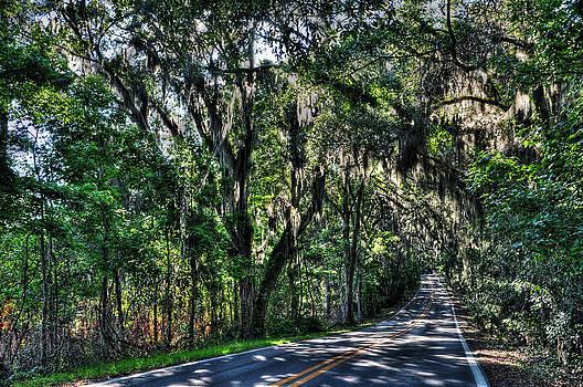 Canopy Road by Alex Owen