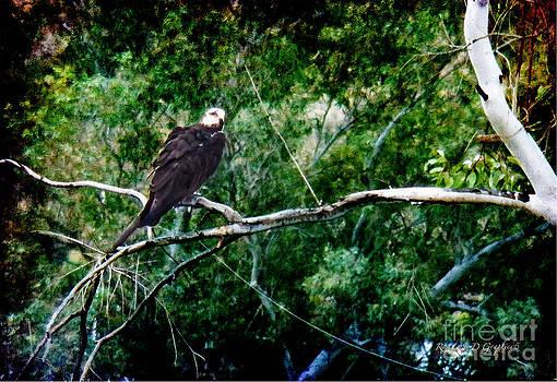 Rhonda Strickland - Canyon Lake Osprey