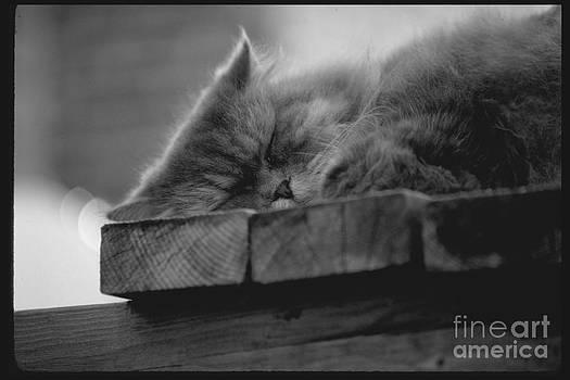 Mark Gilman - Cape Cod Cat