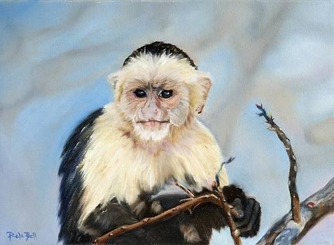 Capuchin Monkey by Pamela Bell