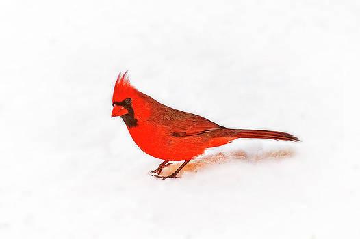 Tamyra Ayles - Young Cardinal