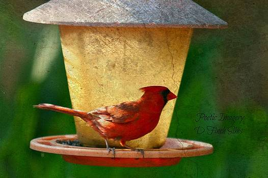 Cardinal by Debbie Sikes