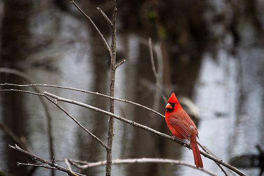 Jason Smith - Cardinal