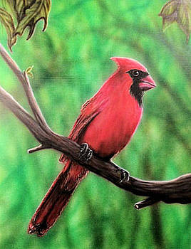 Cardinal R by Mike Wilber