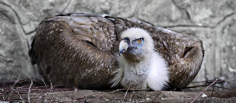 Zoran Buletic - Caring Mom