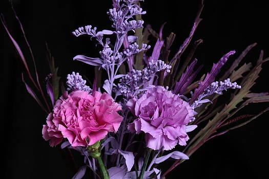 Carnations by Peter Skelton