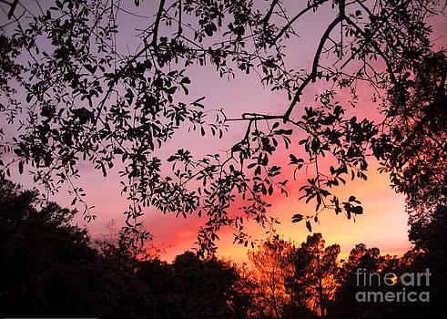 Carolina Sunset by David Campbell
