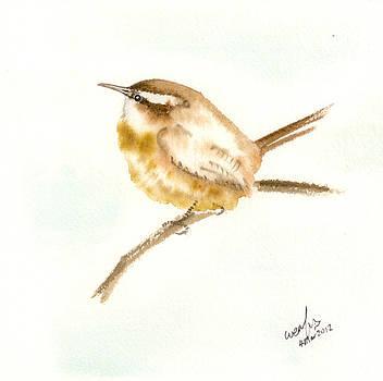 Carolina wren by Wenfei Tong