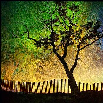 #carpinteria #tree #silhouette by Denise Taylor