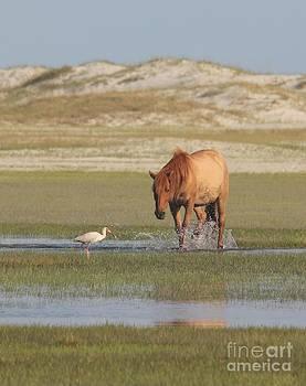 Carrot Island Mustang by Lori Bristow