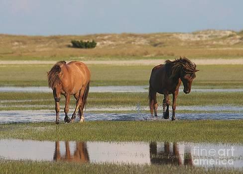 Carrot Island Mustangs by Lori Bristow
