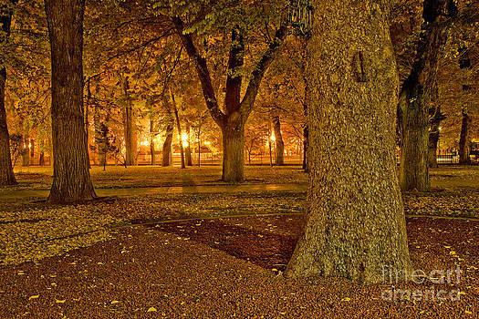 Daniel  Knighton - Carson City at night
