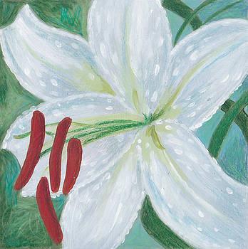 Casablanca Lily by Laurel Porter-Gaylord
