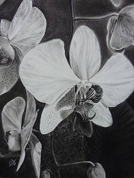Estephy Sabin Figueroa - Cascade of Orchidds