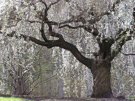 Julie Grandfield - Cascading Petals