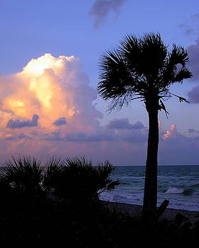Casperson Beach sunrise with palm by John Myers