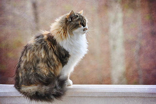 Cassie on the Rail  by Tracey Tilson