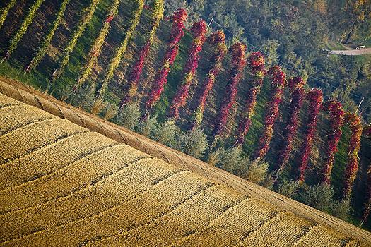 Francesco Riccardo  Iacomino - Castelvetro hills