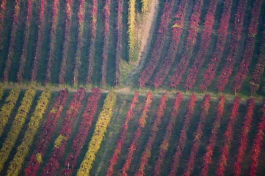Francesco Riccardo  Iacomino - Castelvetro vineyards
