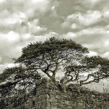 Castle Trees by Felice Willat