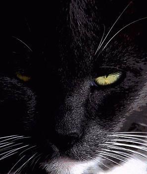 Cat 1A by Judith Szantyr