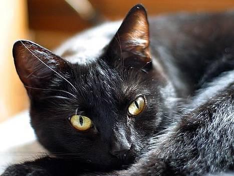 Cat by Ademola kareem oshodi