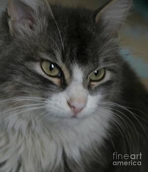 Cat by Alisa Tek