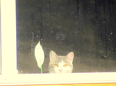 Cat and peace Lily in Window by Amy Bradley