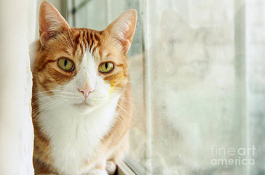 Cat At The Window by Toni Boyer