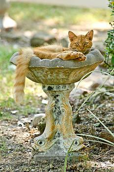 Cat bath by Rob Morgan