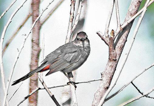 Cat Bird by Garnie McEwen