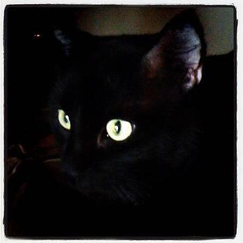 #cat #blackcat #eyes by Jamie H