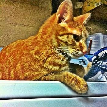 #cat #catlovers #tabby #orange #stripes by Matthew Loving