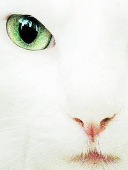 Julie Niemela - Cat Eye
